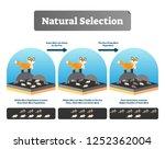 natural selection vector... | Shutterstock .eps vector #1252362004