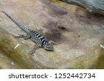 lizard dragon on stone | Shutterstock . vector #1252442734