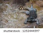 crested dragon on stone | Shutterstock . vector #1252444597