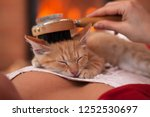 Stock photo cute ginger kitten sleep on woman chest having its fur brushed enjoying the care of owner 1252530697