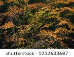 autumn color  at minnewaska... | Shutterstock . vector #1252633687