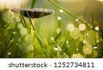Mushroom Hidden In The Green...