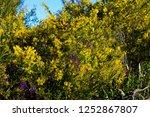soft  beautiful  fluffy ...   Shutterstock . vector #1252867807