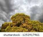 storm clouds rolling in behind... | Shutterstock . vector #1252917961