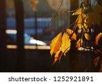 foliage illuminated by sunlight. | Shutterstock . vector #1252921891