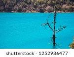 dead tree in the crystal blue... | Shutterstock . vector #1252936477