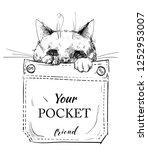 Stock vector little purebred cat in pocket vector illustration 1252953007