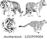 set of vector drawings on the... | Shutterstock .eps vector #1252959004