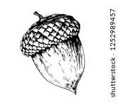 acorn vector hand drawn... | Shutterstock .eps vector #1252989457