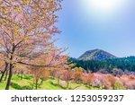spring in japan  the sakura...   Shutterstock . vector #1253059237