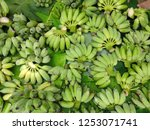 Small photo of Bilk of bananas