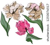vector pink and white tulip... | Shutterstock .eps vector #1253076517