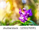 Purple Orchids Purple Flowers Beautiful - Fine Art prints