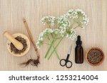 valerian herb root  flowers  ... | Shutterstock . vector #1253214004