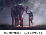 the elephants in forest and... | Shutterstock . vector #1253295751