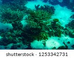 a thriving healthy coral reef...   Shutterstock . vector #1253342731