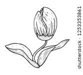 tulip icon. vector illustration ... | Shutterstock .eps vector #1253353861