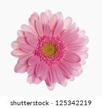 pink gerber isolated on white... | Shutterstock . vector #125342219