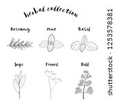herbs collection vector white... | Shutterstock .eps vector #1253578381