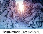 beautiful winter landscape ... | Shutterstock . vector #1253648971