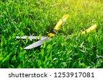 scissors cut the grass on the...   Shutterstock . vector #1253917081