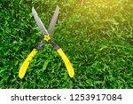 scissors cut the grass on the...   Shutterstock . vector #1253917084
