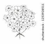 flower phlox. black and white...   Shutterstock .eps vector #1253928511
