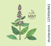 background with mint  plant and ... | Shutterstock .eps vector #1254064861