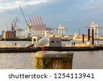 seagull sitting on a bollard in ...   Shutterstock . vector #1254113941