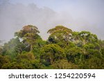 early morning fog in the... | Shutterstock . vector #1254220594