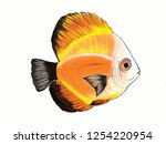 colorful illustration of discus ... | Shutterstock .eps vector #1254220954