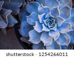 Close Up Succulents With...