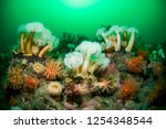 colorful northern red anemone... | Shutterstock . vector #1254348544