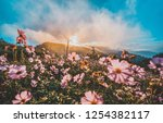 beautiful pink flowers in the... | Shutterstock . vector #1254382117