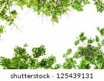 green leaf frame  and white ... | Shutterstock . vector #125439131