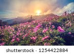 beautiful pink flowers in the... | Shutterstock . vector #1254422884