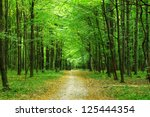 beautiful green forest in summer | Shutterstock . vector #125444354