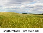 agricultural fields with... | Shutterstock . vector #1254536131