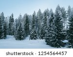 snowy forest in the countryside ... | Shutterstock . vector #1254564457