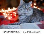 lovely fluffy cat relaxing on...   Shutterstock . vector #1254638134