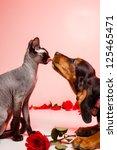Stock photo basset hound puppy licking hairless kitten with valentine s theme 125465471