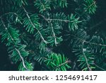 christmas background. green fir ... | Shutterstock . vector #1254691417