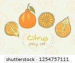 citrus vector set. citrus...   Shutterstock .eps vector #1254757111