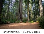 hiking trails at the lady bird... | Shutterstock . vector #1254771811