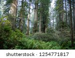 hiking trails at the lady bird... | Shutterstock . vector #1254771817