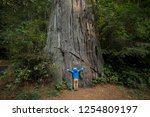 young boy hugging a large tree... | Shutterstock . vector #1254809197