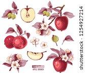 apple fruit vector set. hand... | Shutterstock .eps vector #1254927214