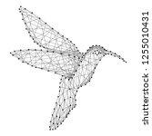 hummingbird colibri flying bird ... | Shutterstock .eps vector #1255010431