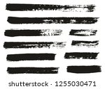 paint brush thin lines high... | Shutterstock .eps vector #1255030471
