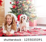 child with dog near christmas... | Shutterstock . vector #1255035391